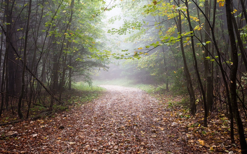 Jeseň v lese