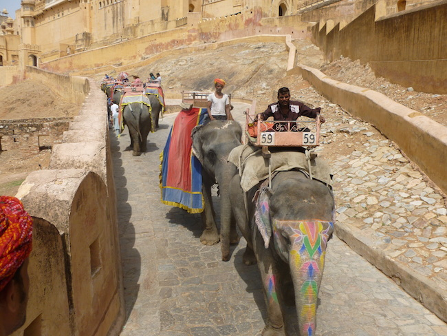 Slony na Amber Fort