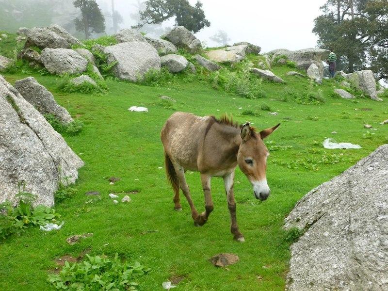 Triund Dharamshala India