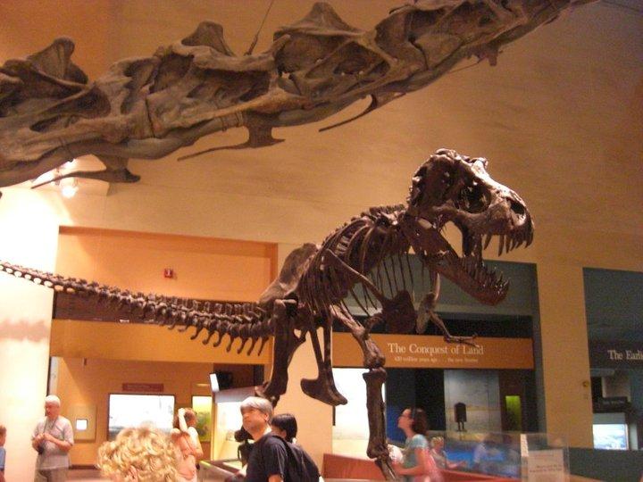 Natural History Museum Washington D.C: