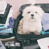 Cesta do zahraničia so psom