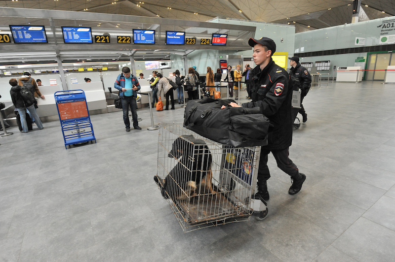 Pes v boxe na letisku