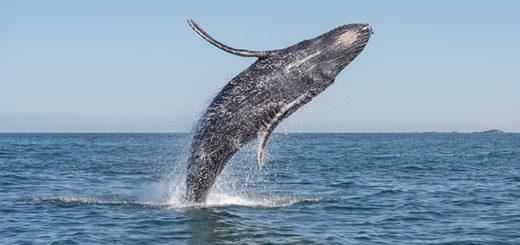 Pozorovanie veľryby