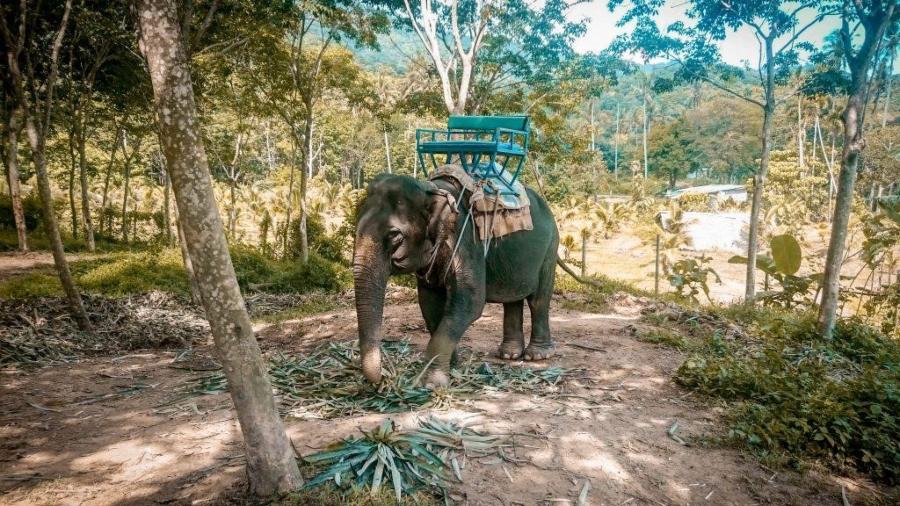 Vozenie ľudí slonom ubližuje
